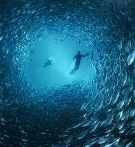 Peixes-no-mar