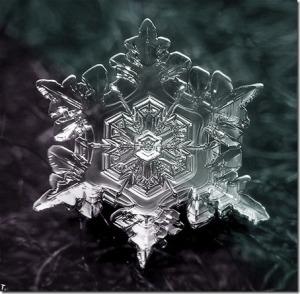 perfeição-do-floco-de-neve