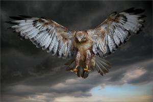 Águia-pássaro